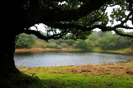 Rainwater pond in Fanal Photo www.madeiraarchipelago.com