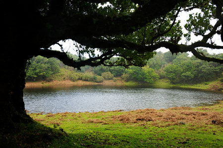 Rainwater pond in Fanal Photo www.madeiraarchipelago.com