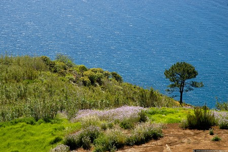Sea view from Arco da Calheta Photo www.madeiraarchipelago.com